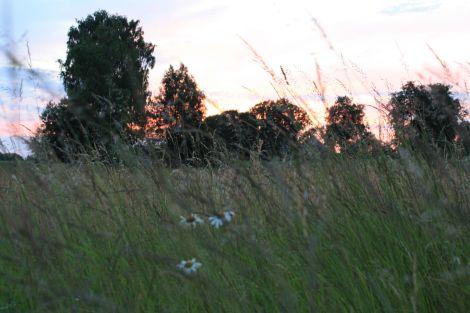 Pļava